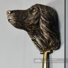 Close-up of the Face of the Afghan Hound Do's Face
