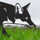 Close-up of the Head of the Iron Silhouette Fox