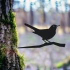 Blackbird Tree Spike in Situ
