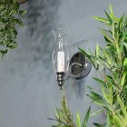 Old Style Gas Lamp Bathroom Wall Light Next to Plants in the Bathroom