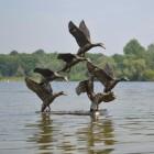 Bronze Flying Duck Sculpture in Situ in a Lake