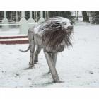 """Aslana Lioness"
