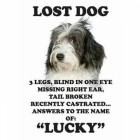 """Lost Dog"" Metal Sign"