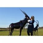 """Choroa Wilds"" Oryx Sculpture"