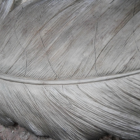 Close-up of the Detail on the Painted Feather Wall Art
