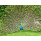 Octagonal  Peacock Sundial