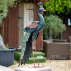 Side View of the Peacock Sculpture in Situ