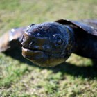 Close-up of The Detail On The Turtle's Head