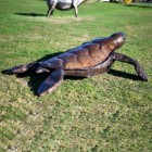 Back View Of The Turtle Sculpture