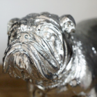 Close-up of the Bull Dogs Face