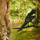 Magpie Tree Spike in Situ