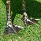 Looking Up Bronze Finish Geese Garden Sculpture Feet