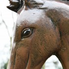 Close up of horse head and eye