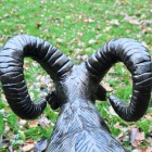 Rear view of Ram's horns