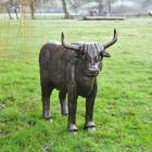 Highland Cow Sculpture in Antique Bronze