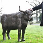 Highland Cow Sculpture in Full
