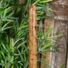 Detailed image of wooden handle on spade design garden boot brush