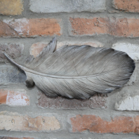 Painted Feather Wall Art - 40cm