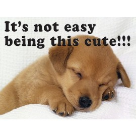 """Adorable """"It's not easy"""" Puppy Sign"""