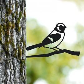 Sparrow Tree Spike on Situ on a Tree