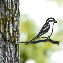 Great Grey Shrike Tree Spike in Use on a Tree