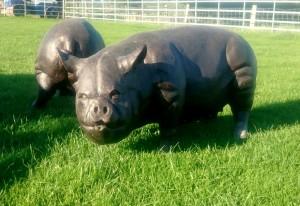 Large Bronzed Metal Pig Sculpture