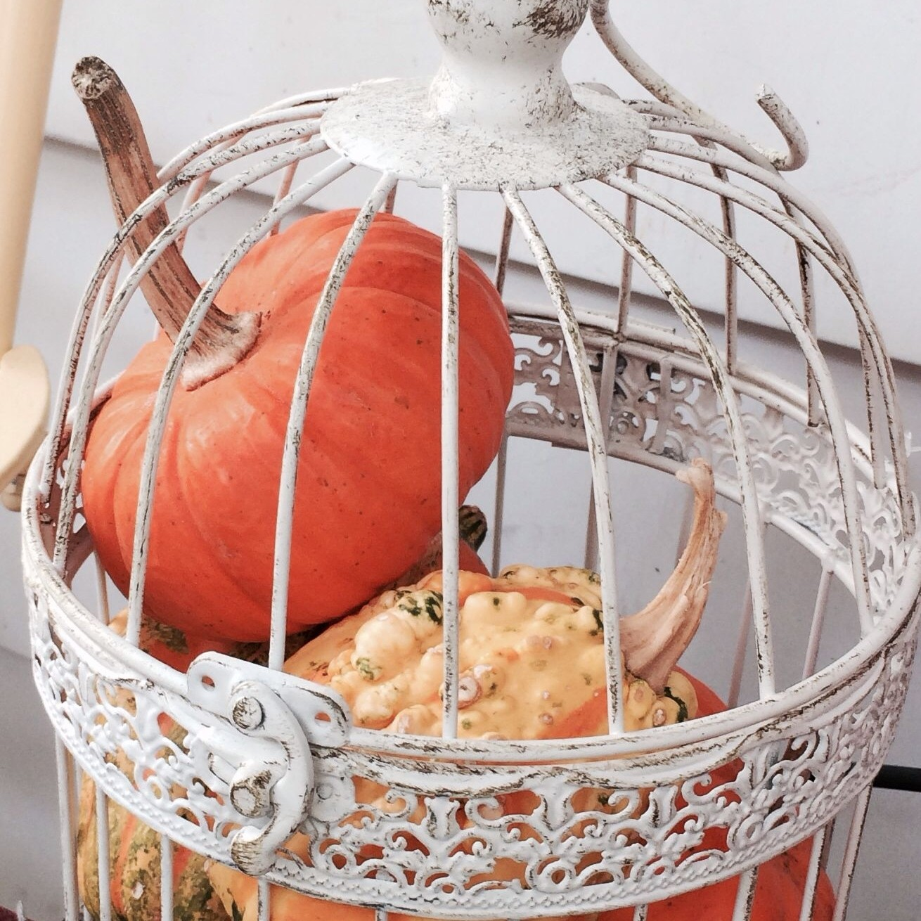 Make Your Home Spooktacular this Halloween