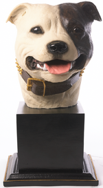 Specially commissioned dark brown & white Staffordshire Bull Terrier Bust