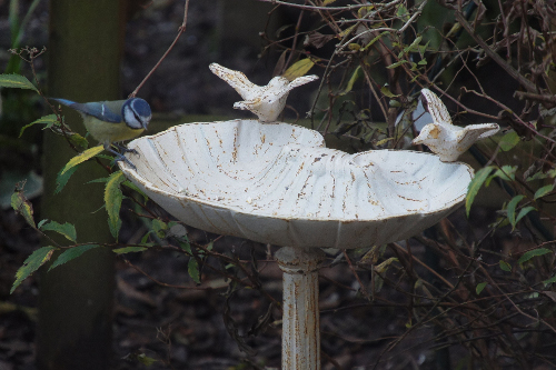 Marie Bird Bath & Bird feeder